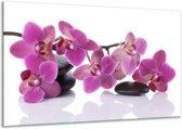 Canvas schilderij Orchidee   Paars, Wit   120x70cm 1Luik
