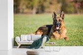 Fotobehang vinyl - Duitse herdershond ligt op het gras breedte 420 cm x hoogte 280 cm - Foto print op behang (in 7 formaten beschikbaar)