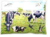 Sierkussen koe koeien thema dieren cadeaus kado koeien liefhebber