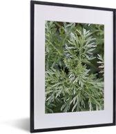 Foto in lijst - Groene kleuren van de alsem plant onder het natuurlijke licht fotolijst zwart met witte passe-partout klein 30x40 cm - Poster in lijst (Wanddecoratie woonkamer / slaapkamer)
