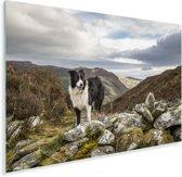 Mooie Border Collie die op de top van de berg staat Plexiglas 180x120 cm - Foto print op Glas (Plexiglas wanddecoratie) XXL / Groot formaat!