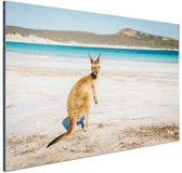 Omkijkende kangoeroe Aluminium 120x80 cm - Foto print op Aluminium (metaal wanddecoratie)