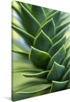 Close up van de slangenden Canvas 80x120 cm - Foto print op Canvas schilderij (Wanddecoratie woonkamer / slaapkamer)