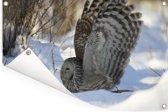 Oeraluil vliegt door de sneeuw Tuinposter 60x40 cm - klein - Tuindoek / Buitencanvas / Schilderijen voor buiten (tuin decoratie)