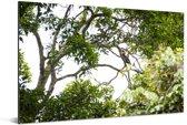 Bossen in het Nationaal park Manusela op het eiland Ceram Aluminium 90x60 cm - Foto print op Aluminium (metaal wanddecoratie)