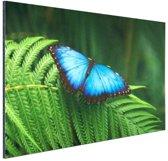 Morpho vlinder Aluminium 90x60 cm - Foto print op Aluminium (metaal wanddecoratie)