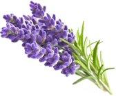Lavendel Refill 3-Pack