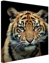 Sumatraanse tijgerwelp Canvas 60x80 cm - Foto print op Canvas schilderij (Wanddecoratie)
