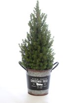 Picea 'Conica' in kerst emmer