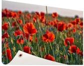Klaprozen in het veld Tuinposter 120x80 cm - Tuindoek / Buitencanvas / Schilderijen voor buiten (tuin decoratie)