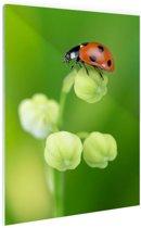 Lente lieveheersbeestje Glas 40x60 cm - Foto print op Glas (Plexiglas wanddecoratie)
