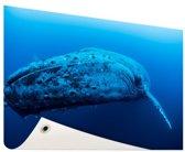 Jonge baleinwalvis onder water Tuinposter 60x40 cm - Foto op Tuinposter / Schilderijen voor buiten (tuin decoratie)