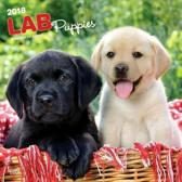 Labrador Retriever Mixed Puppies Kalender 2018