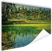 Rijstvelden en palmbomen in Azie Poster 180x120 cm - Foto print op Poster (wanddecoratie woonkamer / slaapkamer) XXL / Groot formaat!