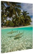 FotoCadeau.nl - Tropische haaien Glas 40x60 cm - Foto print op Glas (Plexiglas wanddecoratie)