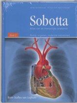 Sobotta / 2 Romp, organen, onderste extremiteit