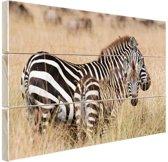 Zebras in de natuur Hout 120x80 cm - Foto print op Hout (Wanddecoratie)