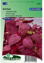Sluis Garden - Melde Red Flash (Atriplex hirtensis)