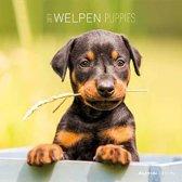 Beeldkalender Welpen 2019 - Puppies - 6 talig - 30 x 30cm