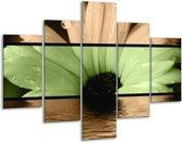 Glasschilderij Bloem | Bruin, Groen, Zwart | 100x70cm 5Luik | Foto print op Glas |  F004481