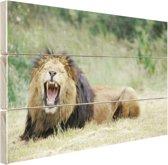 Stoere leeuw Hout 60x40 cm - Foto print op Hout (Wanddecoratie)