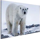 Portret van een ijsbeer Aluminium 90x60 cm - Foto print op Aluminium (metaal wanddecoratie)