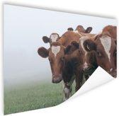 Groep nieuwsgierige koeien Poster 60x40 cm - Foto print op Poster (wanddecoratie woonkamer / slaapkamer) / Dieren Poster