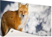 Rode vos Tuinposter 60x40 cm - klein - Tuindoek / Buitencanvas / Schilderijen voor buiten (tuin decoratie)