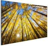Gele bladeren aan de bomen in het bos Aluminium 30x20 cm - Foto print op Aluminium (metaal wanddecoratie)