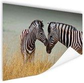 Zebras  Poster 120x80 cm - Foto print op Poster (wanddecoratie woonkamer / slaapkamer) / Dieren Poster