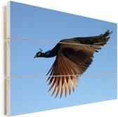 Vliegende pauw Vurenhout met planken 40x30 cm - klein - Foto print op Hout (Wanddecoratie)