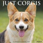 Welsh Corgi Kalender 2020