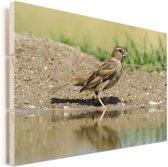 Ortolaan wandelend door bruin water Vurenhout met planken 90x60 cm - Foto print op Hout (Wanddecoratie)