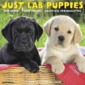 Labrador Retriever Puppies Kalender 2020