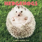 Hedgehogs 2020 Mini Wall Calendar