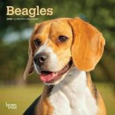 Beagles 2020 Mini 7x7