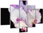 Glasschilderij Orchidee | Paars, Zwart, Wit | 100x70cm 5Luik | Foto print op Glas |  F000384