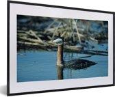 Foto in lijst - Roodhalsfuut zwemt in het blauwe water fotolijst zwart met witte passe-partout 60x40 cm - Poster in lijst (Wanddecoratie woonkamer / slaapkamer)