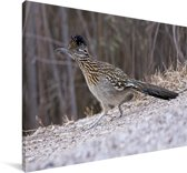 Renkoekoek in een winterse omgeving Canvas 30x20 cm - klein - Foto print op Canvas schilderij (Wanddecoratie woonkamer / slaapkamer)