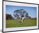 Foto in lijst - Een Border Collie met een stok in de mond fotolijst zwart met witte passe-partout 60x40 cm - Poster in lijst (Wanddecoratie woonkamer / slaapkamer)