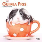 Guinea Pigs 2020 Mini 7x7