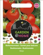 Garden@Home Tomaten Maja -Balkontomaat