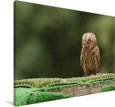 Dwergooruil op een boomtak Canvas 30x20 cm - klein - Foto print op Canvas schilderij (Wanddecoratie woonkamer / slaapkamer)