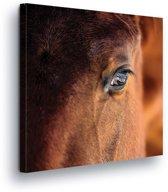 Horse Canvas Print 80cm x 80cm