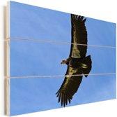Een Californische condor aan het vliegen Vurenhout met planken 120x80 cm - Foto print op Hout (Wanddecoratie)