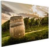 Wijngaard in Pesaro  Glas 120x80 cm - Foto print op Glas (Plexiglas wanddecoratie)