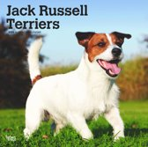 Browntrout Publishers, I: Jack Russell Terriers Intl 2020 Sq