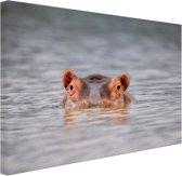 Nijlpaard close-up boven water Canvas 120x80 cm - Foto print op Canvas schilderij (Wanddecoratie woonkamer / slaapkamer) / Dieren Canvas Schilderij