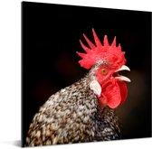 Close up van een rode haan Aluminium 90x90 cm - Foto print op Aluminium (metaal wanddecoratie)