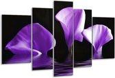 Glasschilderij Bloem | Paars, Zwart | 170x100cm 5Luik | Foto print op Glas |  F002861